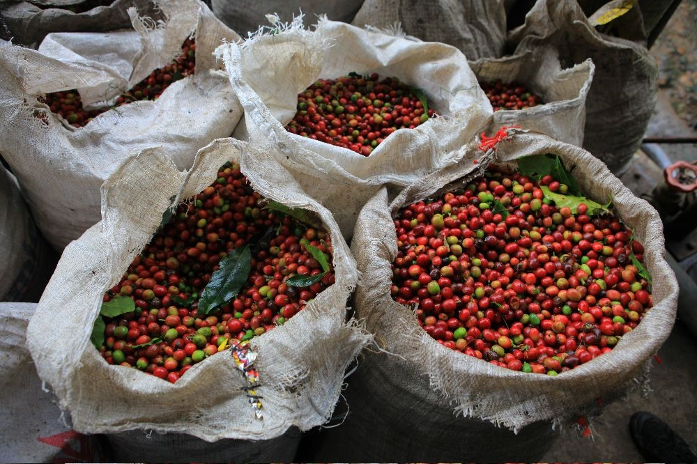 COFFEE OF THE MONTH - NEW GUINEA